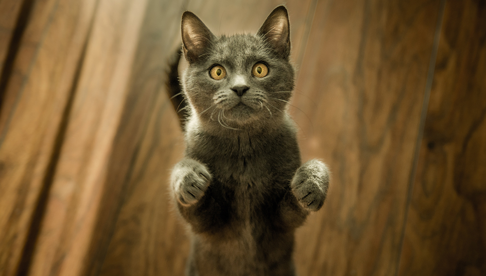 Joint Dislocation in Cats